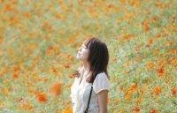 漂亮的花海图片
