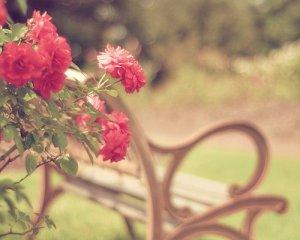 浪漫的玫瑰鲜花图片