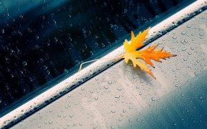 雨后飘落的枫叶唯美高清美图集合